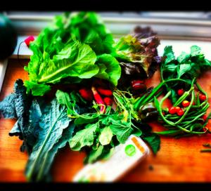 veggies from my friend marcus's organic farm