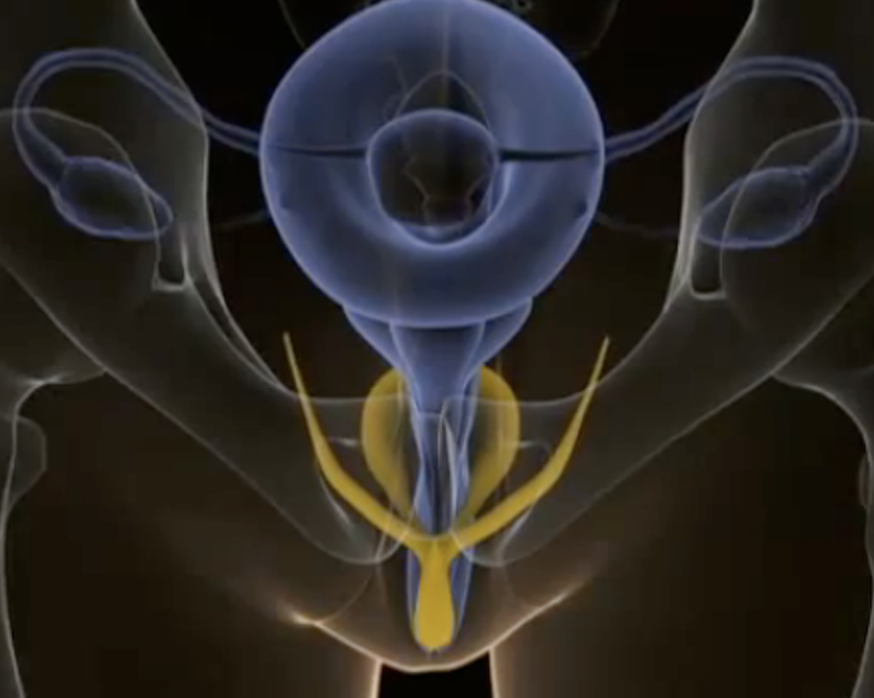 The physiology of an orgasm