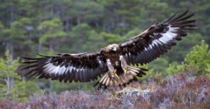 eagle soars beyond earthly concerns